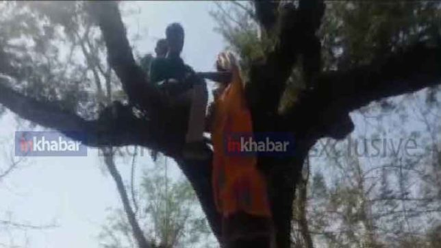 Video : People have to climb on tree due to punch pos machine at udaipur rajasthan