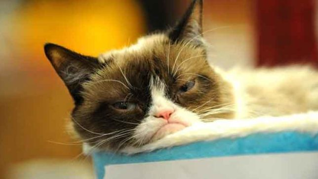 grumpy cat, famous cat, famous animals, rich cat, rich animals, weired news