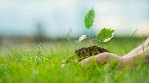 Happy-World-Environment-Day-2019-Wishes-in-English-2